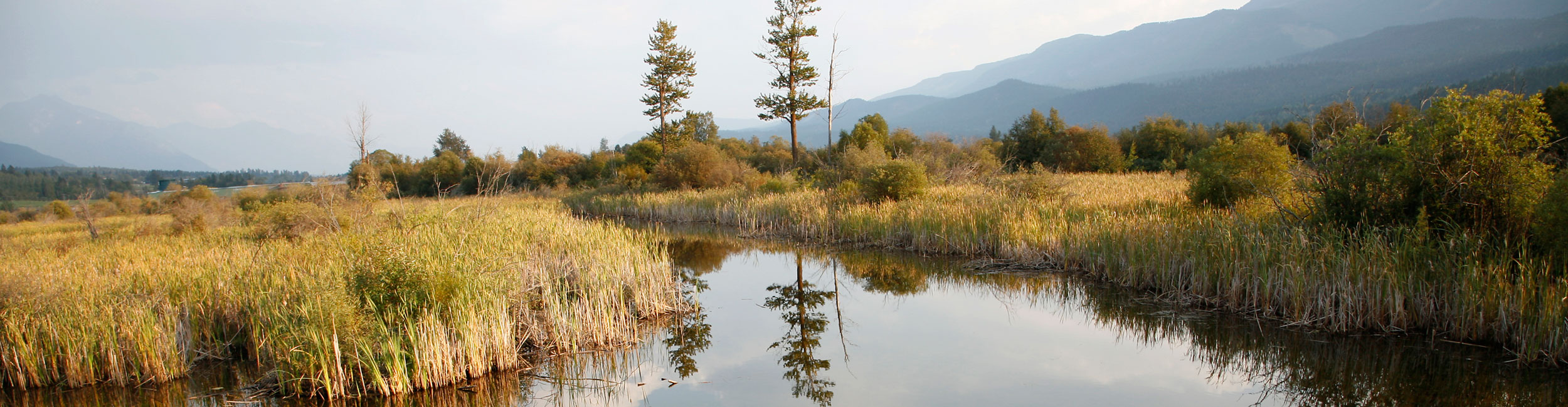 Wetlands near Golden, BC