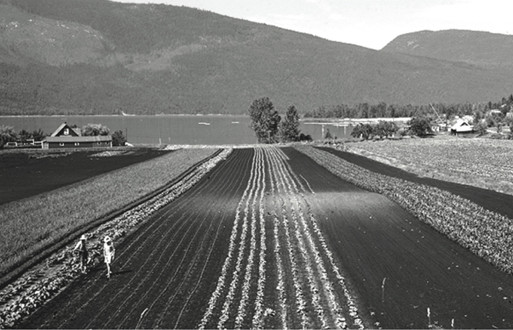 The Spicer farm at Nakusp