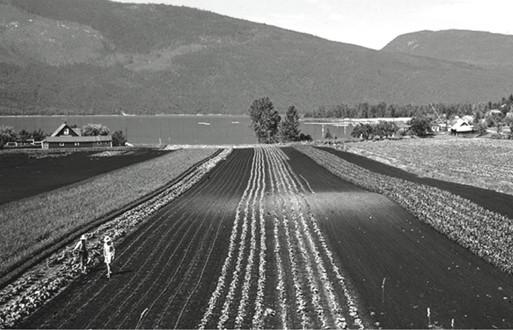The Spicer farm at Nakusp