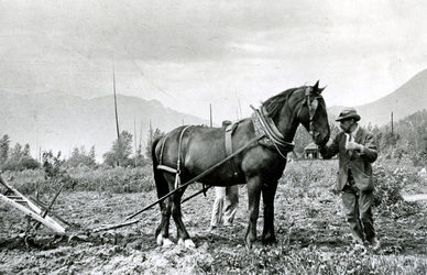 Plowing the fields at Firwood Farm, Howser, Duncan Lake 1912.